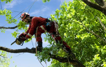 find trusted rated Clackmannanshire tree surgeons
