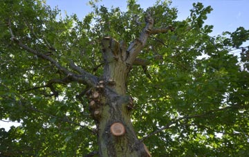 what is Clackmannanshire tree surgery?